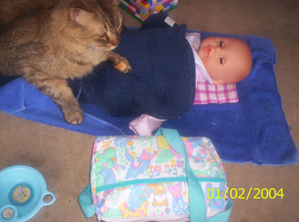 Kitty babysitting Community Photo By: Tama Submitted By: Tama, Midwest