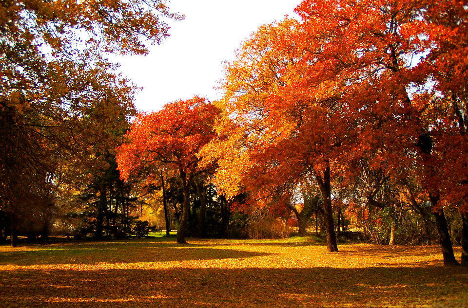 The colors of Fall in Harrah seem more vibrant this year.<br/><b>Community Photo By:</b> Ron Skeeters<br/><b>Submitted By:</b> Ron,