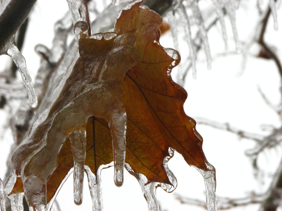 Frozen leaf<br/><b>Community Photo By:</b> Leah<br/><b>Submitted By:</b> Leah, Midwest City