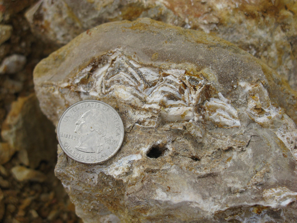 This photo, provided by Cojeen Archaeological Services, shows fossilized bone fragments found at the Packsaddle Wildlife Management Area during a recent excavation. <strong></strong>