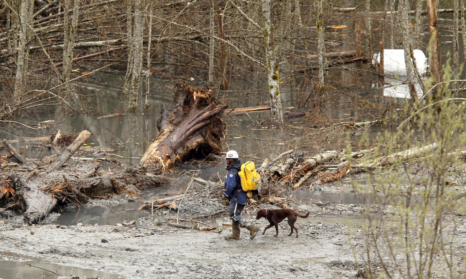 Photo - A searcher and dog walk past debris and standing water at the scene of a deadly mudslide, Thursday, March 27, 2014, in Oso, Wash. Authorities said the number of fatalities in the mudslide will go up substantially within the next two days. Sixteen bodies have been recovered, but officials say at least nine more had been found as of Wednesday night. There are 90 people confirmed missing from the Saturday morning mudslide 55 miles northeast of Seattle. (AP Photo/The Herald, Mark Mulligan, Pool)