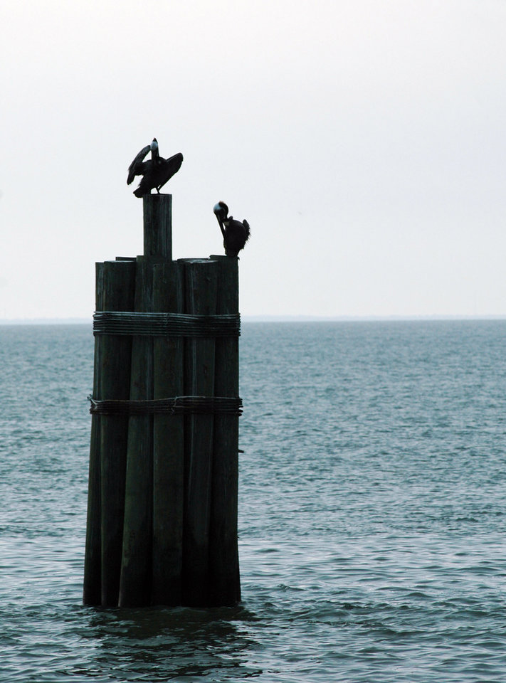 Photo - FILE - In this May 3, 2010 file photo, pelicans are perched atop a piling in Mobile Bay at Mobile, Ala. While it doesn't get the attention of New Orleans, Mobile has plenty of Southern charm and many free attractions, like fishing or kayaking in the bay. (AP Photo/Jay Reeves, File)