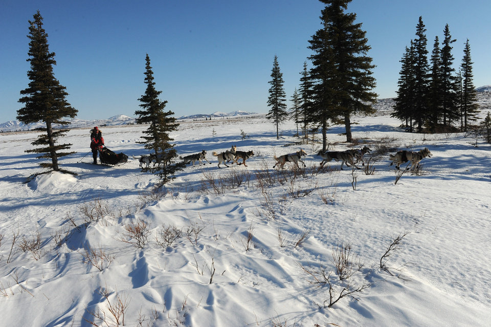 Photo - Aliy Zirkle mushes her dog team between the checkpoints of Kaltag and Unalakleet during the 2014 Iditarod Trail Sled Dog Race on Saturday, March 8, 2014. (AP Photo/The Anchorage Daily News, Bob Hallinen)