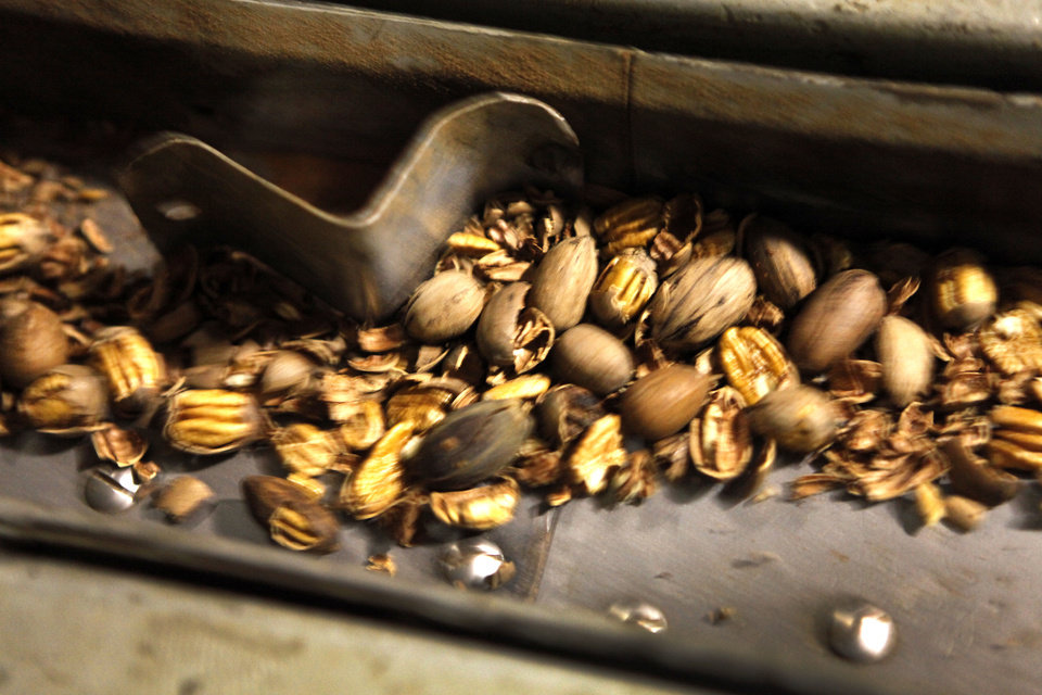 Pecans come out of the sheller at Valley View Pecan Co. in Shawnee. Photo by David McDaniel, The Oklahoman