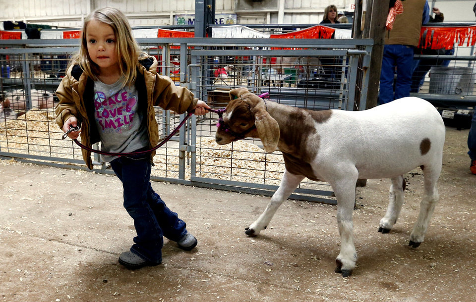 Alexis Compton, 4, of Moore, is a showman in training at the Cleveland County Junior Livestock Show. The show opened Wednesday and concluded Friday with a banquet and auction.  PHOTOs BY STEVE SISNEY, THE OKLAHOMAN