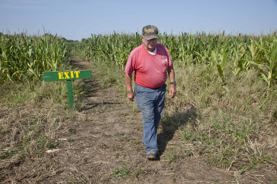 Photo -   In this photo taken Tuesday, Oct. 2, 2012, farmer Bob Schaefers walks from the exit of a trail through his corn maze near Mayflower, Ark. Devastating spring freezes and this year's historic drought have taken some of the charm out of rustic fall destinations, leaving some corn mazes too short for labyrinth duty, orchards virtually devoid of U-pick apples and fall colors muted. (AP Photo/Danny Johnston)