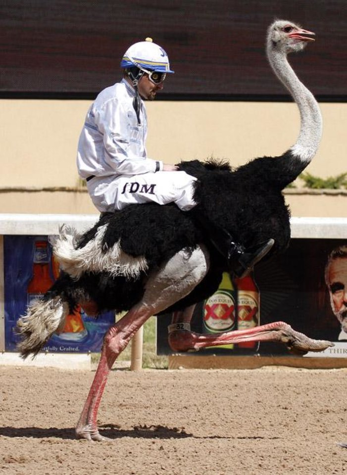 Photo -  OSTRICK RACING / RACES: J.D. Mithener rides Big Byrd during an ostrich race at Extreme Racing, Sunday, April 10, 2011, at Remington Park in Oklahoma City. Photo by Sarah Phipps, The Oklahoman ORG XMIT: KOD