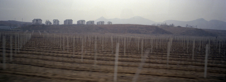 In this Aptil 10, 2012, photo, apple tree saplings stand in rows beneath workers\' housing on a hill at a communal apple farm on the outskirts of Pyongyang. (AP Photo/David Guttenfelder)
