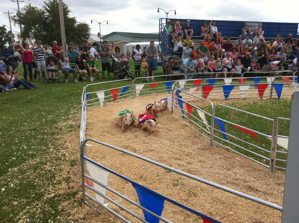 Photo -  Best picture I ever took: the Swifty Swine Racing Pigs at the 2010 Oklahoma State Fair. [Photo by Ken Raymond, The Oklahoman Archives]