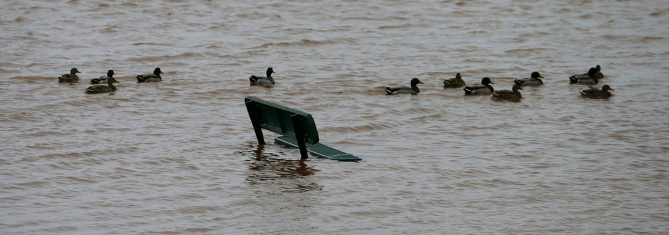 Photo - Ducks swim past a park bench submerged in water at a neighborhood pond in northwest Oklahoma City, Sunday, December 27, 2015. Photo by Bryan Terry, The Oklahoman