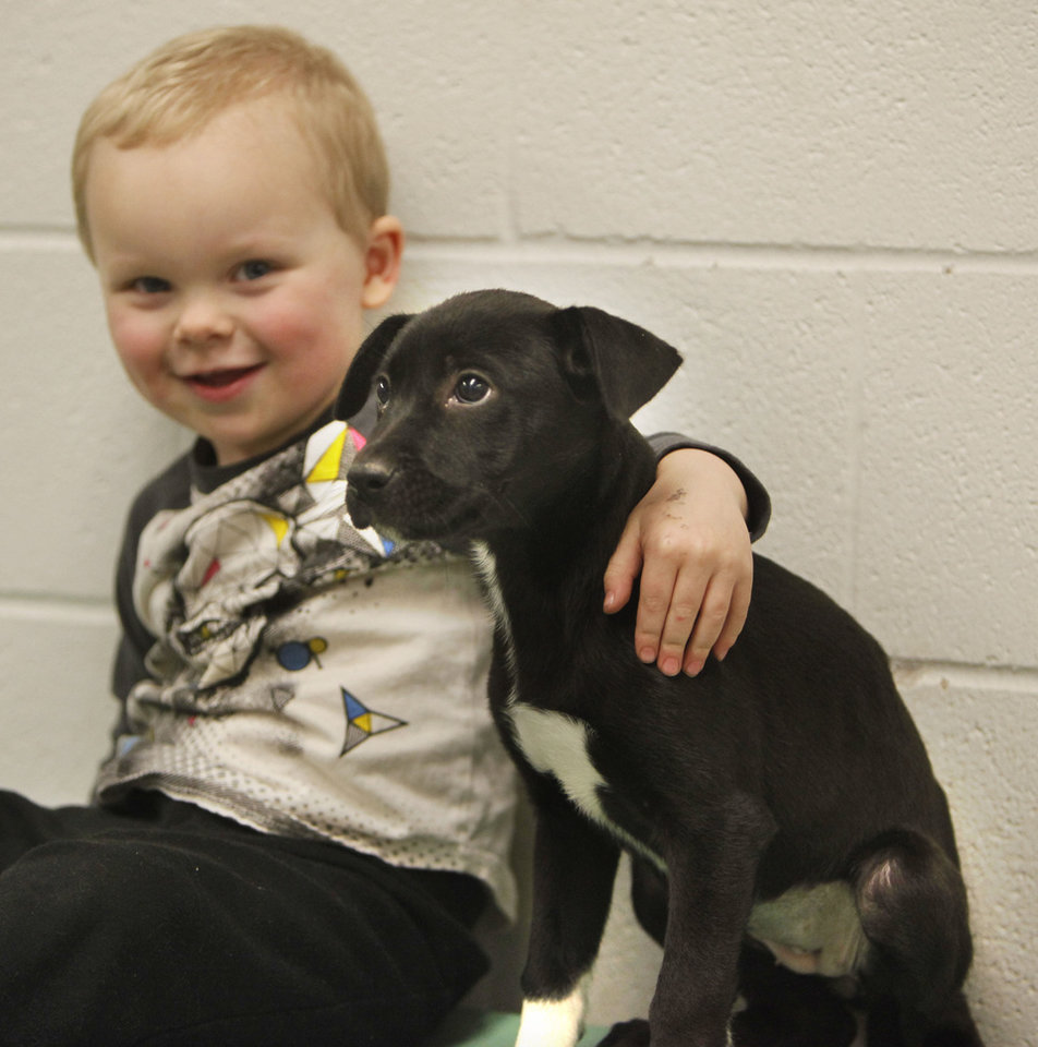 Bentley Mueller, 2, pets a Labrador puppy during the Furever Love Adoption Event.