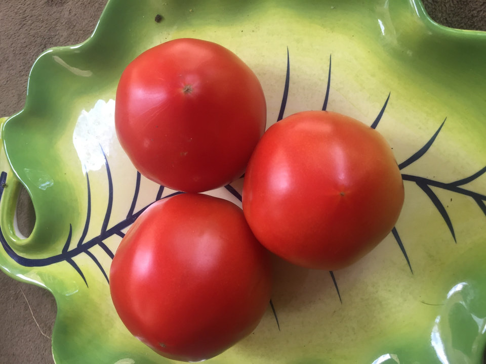 Photo -  Pick tomatoes just as they start to ripen, then place out of direct sunlight at temperatures around 70 degrees so they will develop a deep red color and full flavor.