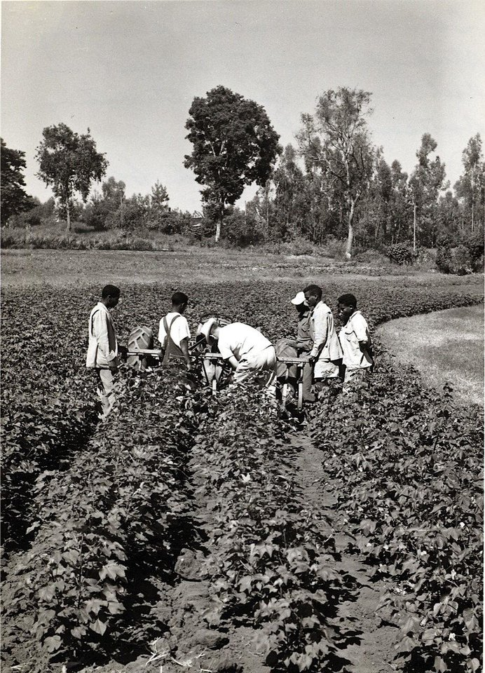 Photo - Students at Jimma High School work in fields.