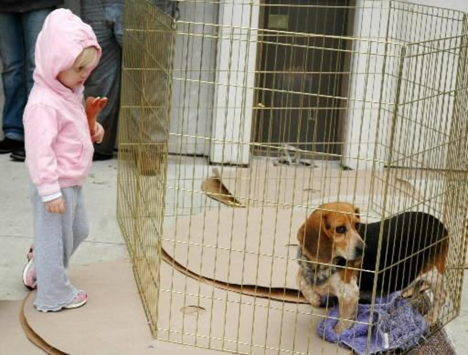 Photo - Kelsie Martin, 2, of  Shawnee, looks at one of many dogs available at an adoption fair held Thursday, Oct. 22, 2009, for the more than 90 rescued canines from a Pottawatomie County puppy mill. Photo by Ann Kelley, The Oklahoman