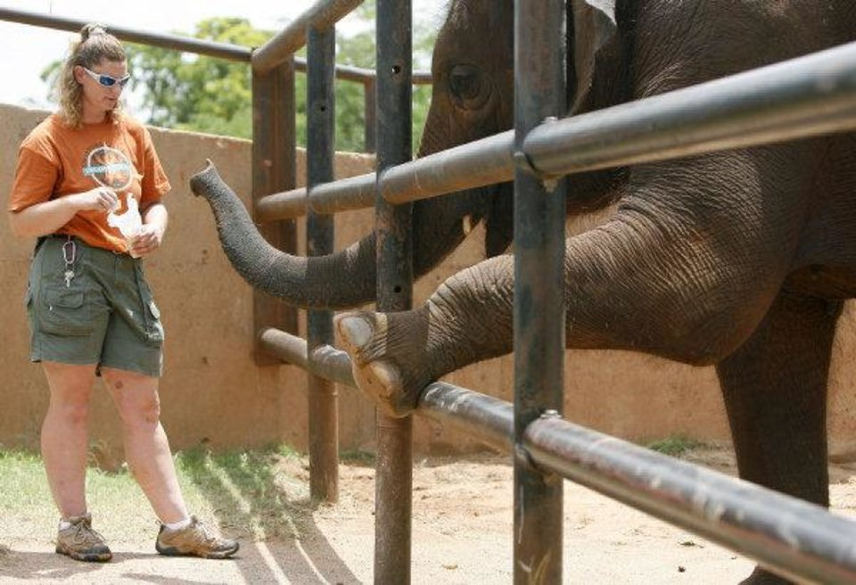 Zookeeper Toni Rife feeds Chandra after the elephant presents her foot for examination at the Oklahoma CIty Zoo's old elephant exhibit in 2008. <strong>SARAH PHIPPS - THE OKLAHOMAN ARCHIVE</strong>