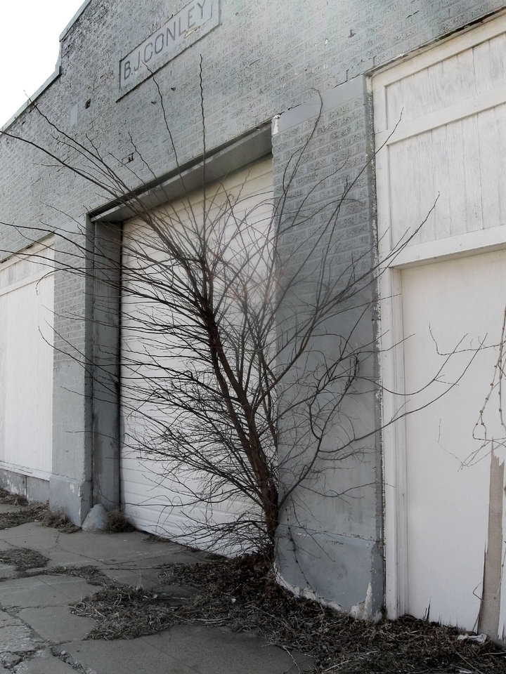Trees are growing from several sections of the decades old gas station at NW 10 and Harvey. Photo by Steve Lackmeyer, The Oklahoman