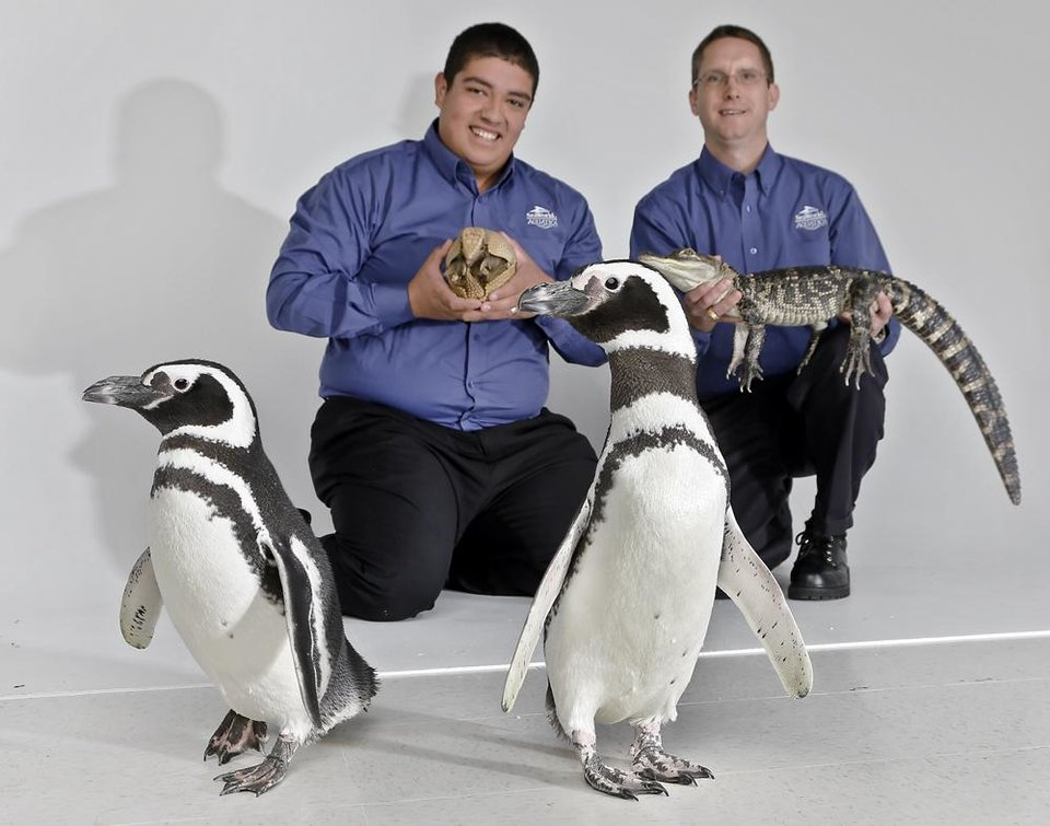 Photo -  SeaWorld animal ambassadors Clay Carabajal and Jason Baca, from left, pose for a photo with a Three Banded Armadillo, Wilson, American Alligator, Rocky, and Magellanic Penguin's Penny and Pete on a visit to the OPUBCO office from SeaWorld on Thursday, Feb. 21, 2013, in Oklahoma City, Okla. Photo by Chris Landsberger, The Oklahoman