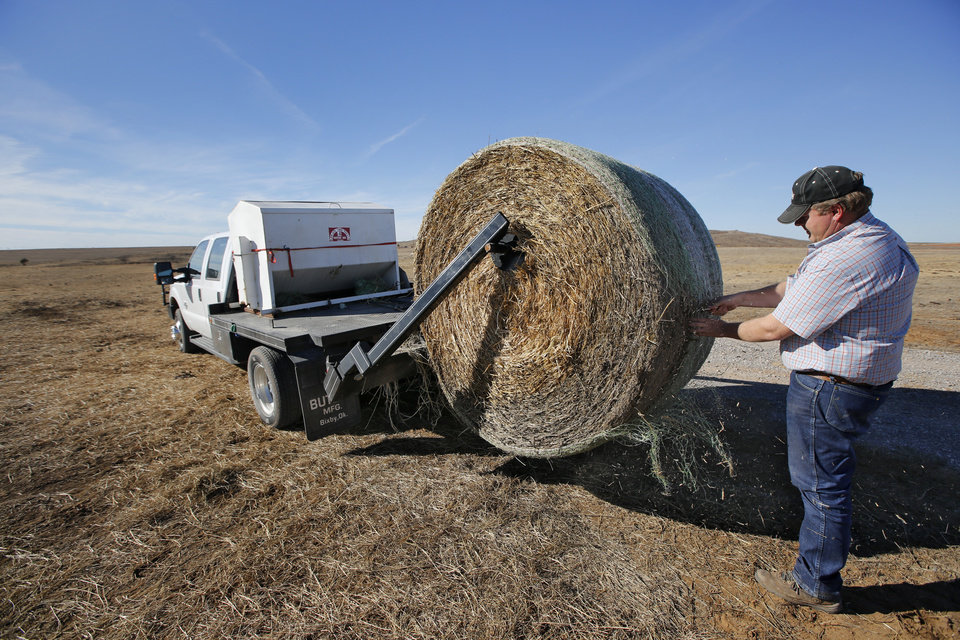 Photo -  Eric Bilderback feeds his cattle Tuesday at his Canadian County ranch. Bilderback is one of many Oklahoma farmers who filed for subsidies under the federal Livestock Forage Disaster Program.  PHOTO BY STEVE GOOCH, THE OKLAHOMAN   Steve Gooch -  The Oklahoman