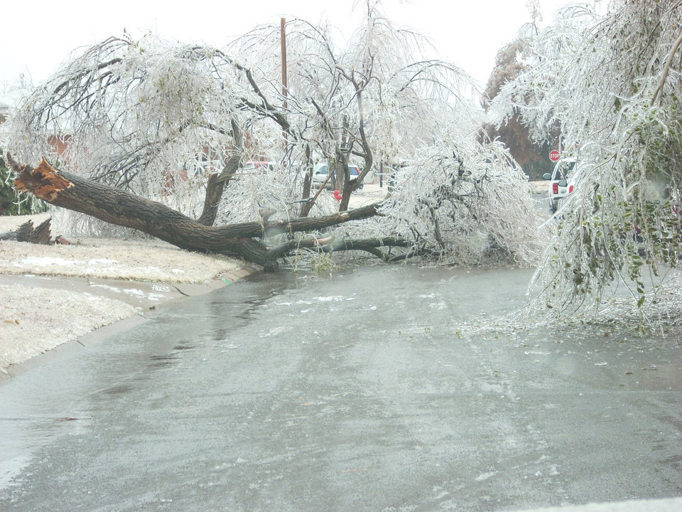 Huge tree across Maple Drive in Midwest City.<br/><b>Community Photo By:</b> Leonard Sparks<br/><b>Submitted By:</b> Leonard, Midwest City