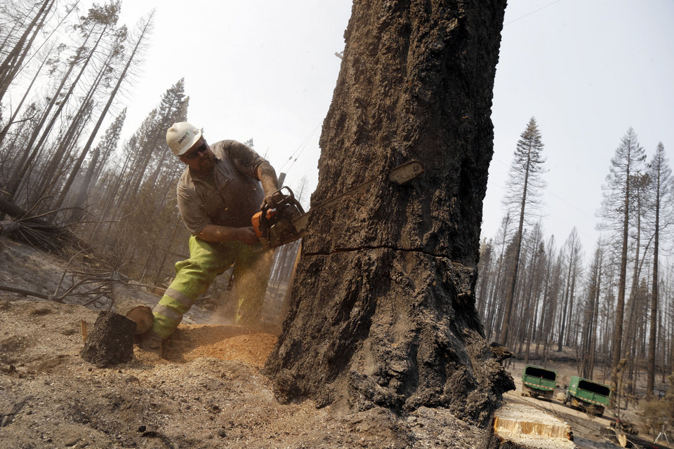 Trevor McPhillips talkes down a burned up tree at a subdivision in Manton, Calif., Friday, Aug.  24, 2012. Residents of the tiny mountain town of Mineral, Calif., breathed easier Friday after air tankers and helicopters blunted the run of a massive wildfire in Northern California just outside Lassen Volcanic National Park. Sixty-four homes and 20 other buildings have been destroyed, mostly in the Manton area, since lightning ignited the blaze Saturday. AP photo