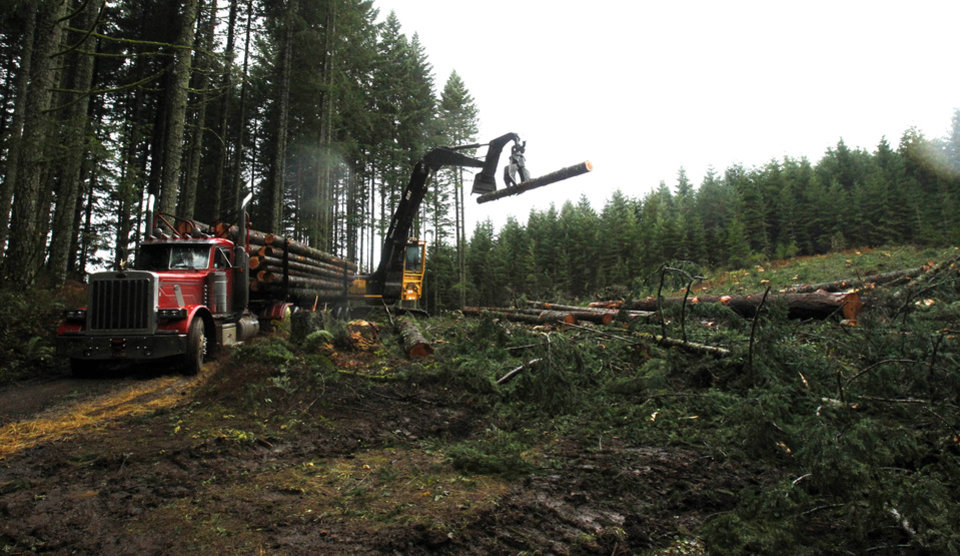 Photo - Logs are loaded on a truck in the forest near Banks, Ore., Friday, Nov. 30, 2012.  The U.S. Supreme Court will hear a case Monday, Dec. 3, regarding regulation of water runoff from logging roads.(AP Photo/Don Ryan)