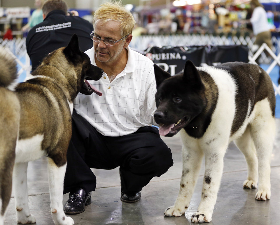 Photo -  Jack Lane of Defiance, Ohio, an assistant to a handler, watches Darma, left, and Banks, both Akitas, during the OKC Summer Classic Dog Shows on Wednesday at the Cox Convention Center in downtown Oklahoma City. The dog shows continue through Sunday. Photo by Nate Billings, The Oklahoman   NATE BILLINGS -  NATE BILLINGS