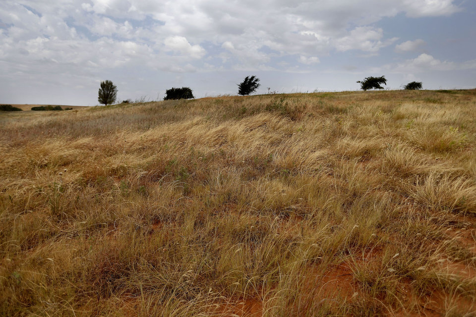 Dry grass is pictured at the Reuter Farm in Reno, Okla., Thursday, Aug. 16, 2012. Photo by Sarah Phipps, The Oklahoman