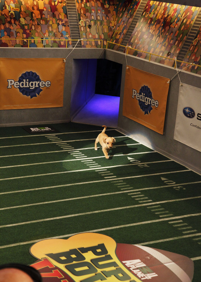 Photo - This undated publicity photo provided by Animal Planet shows a dog, Fumble, during the kitty half-time show for
