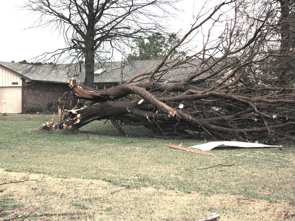 Photo - A tree was uprooted in the front lawn of a house in the Big Cedar addition.. PHOTOS BY JOHN A. WILLIAMS, THE OKLAHOMAN