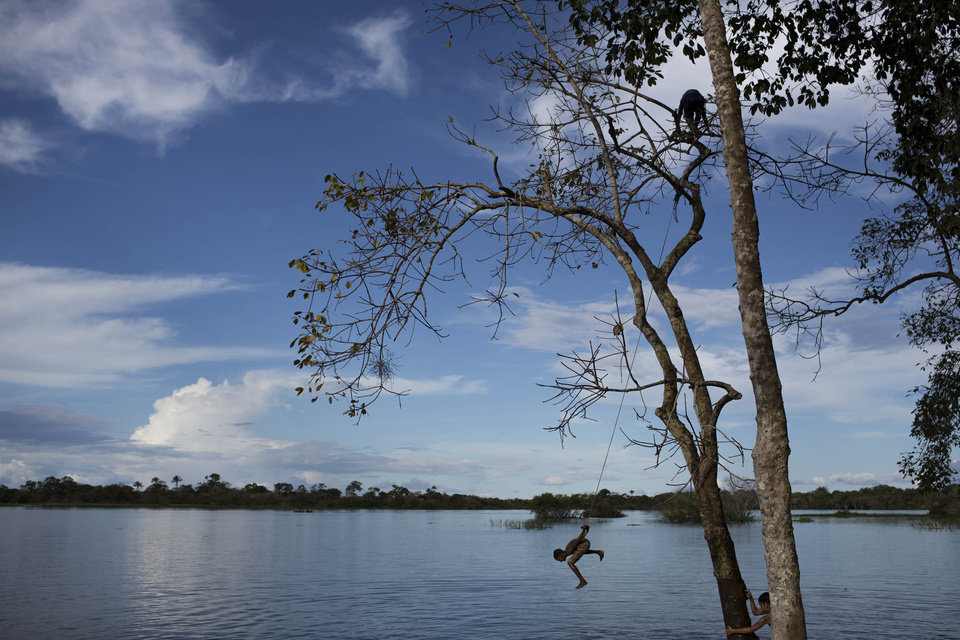 Photo - In this May 18, 2014 photo, a boy swings on a rope as others climb a tree in the Rio Negro River in Sao Pedro, near Manaus, Brazil. Manaus' far-flung location in the heart of the world's biggest rainforest makes it reachable only by plane or boat. An estimated 52,000 or so foreigners are expected to arrive in the Amazonian metropolis of Manaus, a World Cup host city. (AP Photo/Felipe Dana)