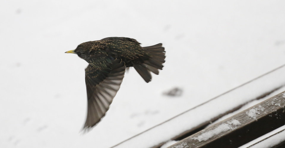 Photo - A bird flies off from a snow-covered bench, Monday, March 3, 2014 in New York. Winter kept its icy hold on much of the country Monday, with snow falling and temperatures starting to plummet from the Mid-Atlantic states up to the East Coast. (AP Photo/Mark Lennihan)