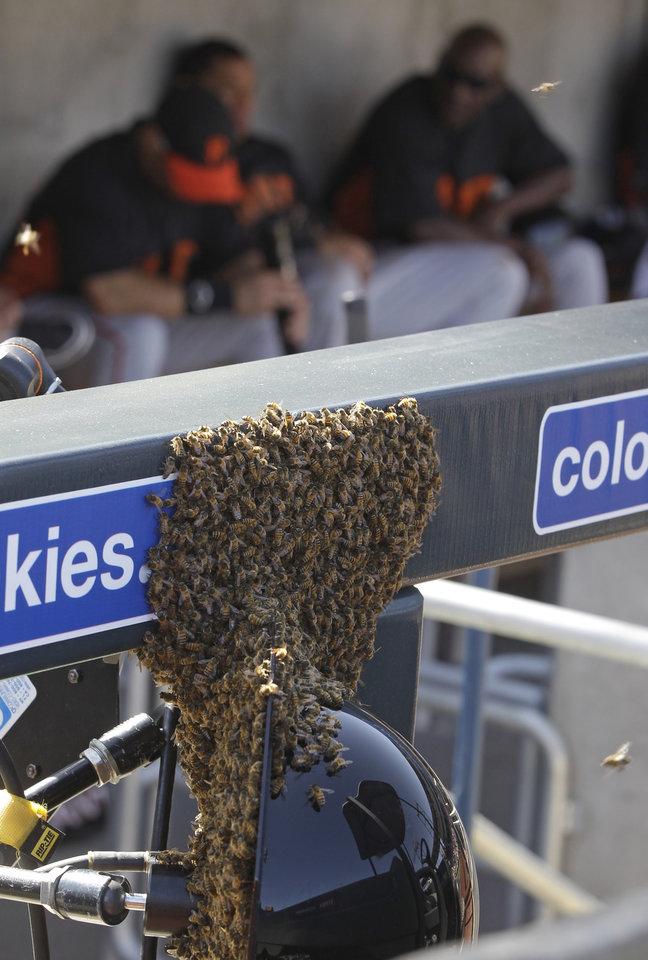 Photo -   San Francisco Giants players sit in the dugout as a swarm of bees rest on the fence during the second inning of a spring training baseball game against the Arizona Diamondbacks, Sunday, March 4, 2012, in Scottsdale, Ariz. The game was delayed for 41 minutes because of a swarm of bees. (AP Photo/Darron Cummings)