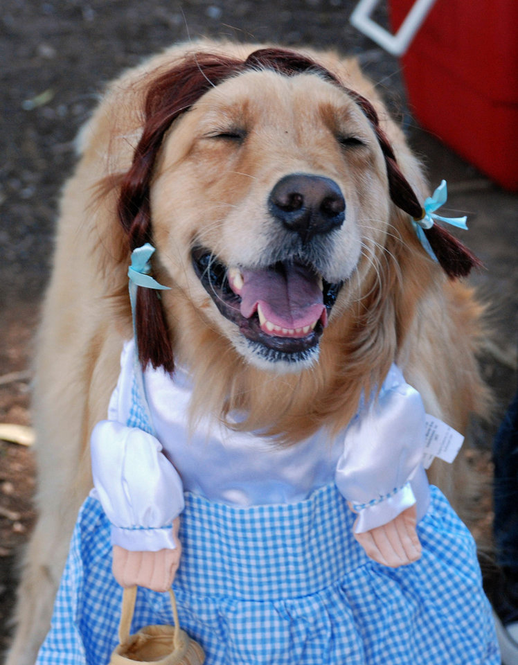 Photo - This Oct. 31, 2010 image provided by Sue Subkow, shows her golden retriever, Jill, in costume as Dorothy from The Wizard of Oz  (AP Photo/Sue Subkow)  Sue Subkow - AP