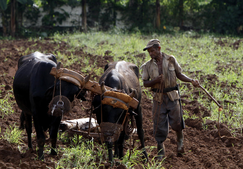 FILE - In this Sept. 26, 2012 file photo, a farmer prepares his field for planting tomatoes and chard, in Havana, Cuba. Havana learned important lessons about overdependence when the 1991 collapse of the Soviet Union threw the country into a deep crisis. Trying to avoid the consequences of a similar aid cut by  Venezuela, the Cuban government has been allowing some private-sector activity, giving a leg up to independent and cooperative farming, and decentralizing its sugar industry. (AP Photo/Franklin Reyes, File)