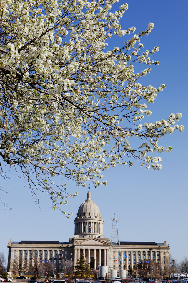 Photo - SPRING / BLOSSOM: A tree in bloom on the grounds at the state Capitol in Oklahoma City Thursday, Mar. 1, 2012. Photo by Paul B. Southerland, The Oklahoman