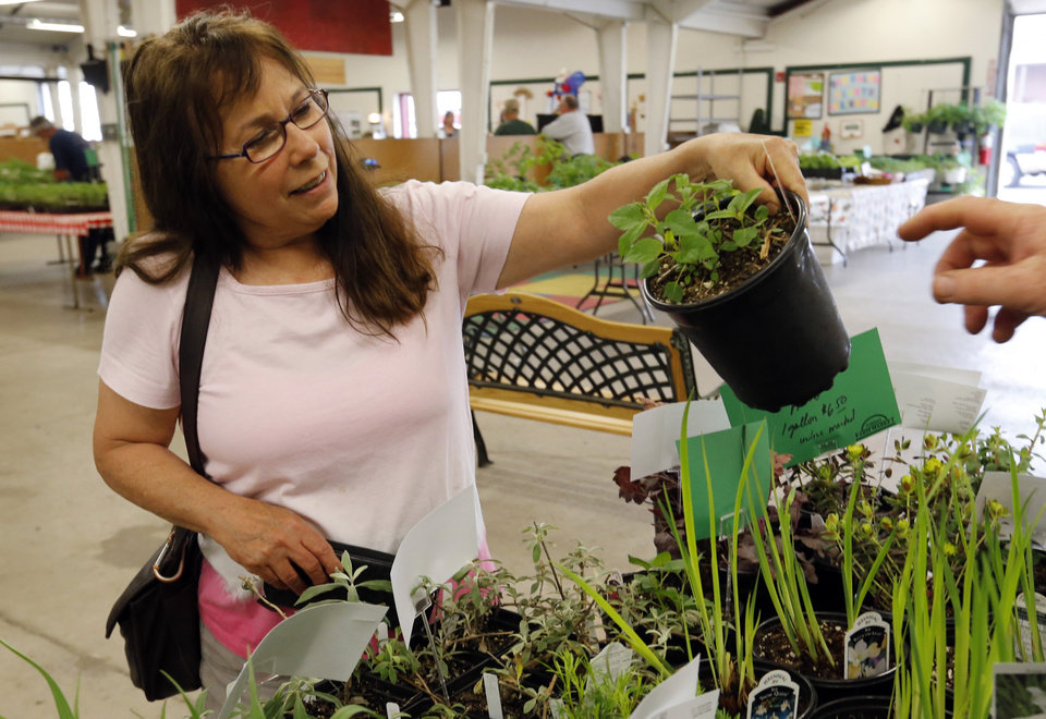 Annie Potts looks for plants and vegetables at the Farmer's Market at the Cleveland County Fairgrounds on Wednesday, April 17, 2013 in Norman, Okla.  Photo by Steve Sisney, The Oklahoman