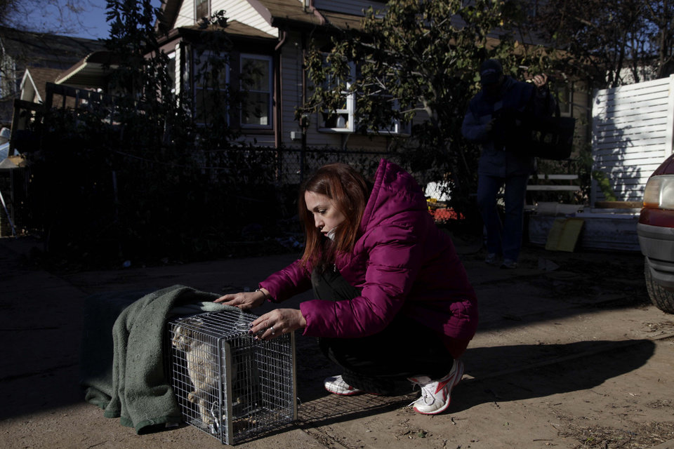 Dina McKenzie tries to cal a feral cat she trapped in the New Dorp section of the Staten Island borough of New York, Tuesday, Nov. 6, 2012. McKenzie, who is working with two animal rescue groups, came from New Jersey to help displaced homeowners find their pets and catch strays that need care. (AP Photo/Seth Wenig) ORG XMIT: NYSW121