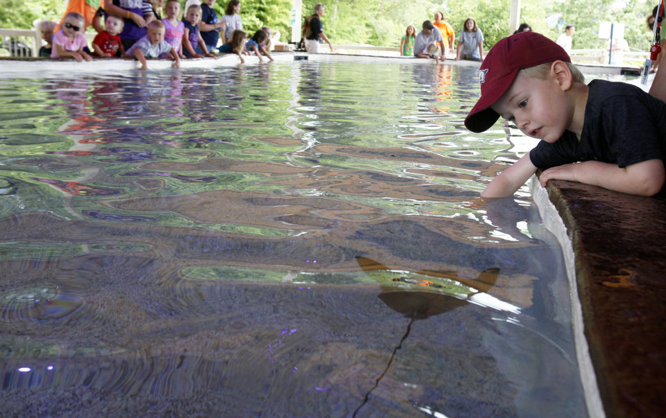 CHILD / CHILDREN / KIDS: Reid Shaw (4) of Edmond leans over to pet a sting ray at the Oklahoma City Zoo's newest Sting Ray Bay exhibit on Tuesday, July 16, 2013. Photo by Aliki Dyer/ The Oklahoman