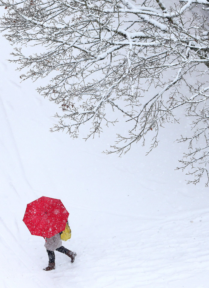 Photo - A pedestrian passes beneath a snow-covered tree on Oak Street in Eugene, Ore. on Friday, Dec. 6, 2013. (AP Photo/The Register-Guard, Brian Davies)