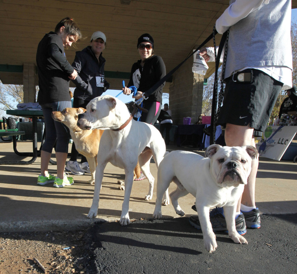Photo - Dogs and their owners prepare to begin the Doggie Dash 5k run at J.L. Mitch Park in Edmond. The event was a fundraiser created by a woman who is going to India to teach orphans. PHOTO BY PAUL HELLSTERN, THE OKLAHOMAN.  PAUL HELLSTERN - OKLAHOMAN
