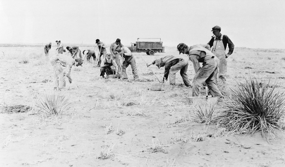Photo -   In this 1935 photo, workers plant a shelterbelt strip of trees on the farm of Dr. A.H. Bungardt, west of Cordell, during reclamation following the Dust Bowl.  AP FILE PHOTO    -  AP