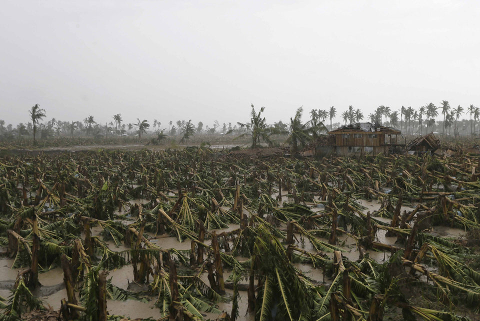 "An almost completely destroyed banana plantation is seen Friday Dec. 7, 2012 following Tuesday's typhoon named ""Bopha"" which hit Nabunturan township, Compostela Valley in southern Philippines. The economic losses began to emerge Friday after export banana growers reported that 14,000 hectares (34,600 acres) of export banana plantations, equal to 18 percent of the total in Mindanao, were destroyed. The Philippines is the world's third-largest banana producer and exporter, supplying well-known brands such as Dole, Chiquita and Del Monte mainly to Japan and also to South Korea, China, New Zealand and the Middle East. (AP Photo/Bullit Marquez)"