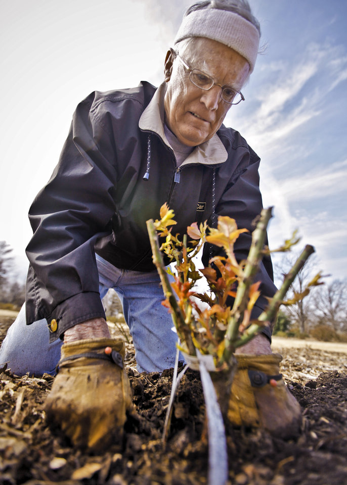 Sam Bowman works in one of the flower beds while planting more than 120 rose plants at the Charles E. Sparks Rose Garden at Will Rogers Garden Exhibition Center on Monday, Feb. 27, 2012 in Oklahoma City, Okla. Photo by Chris Landsberger, The Oklahoman