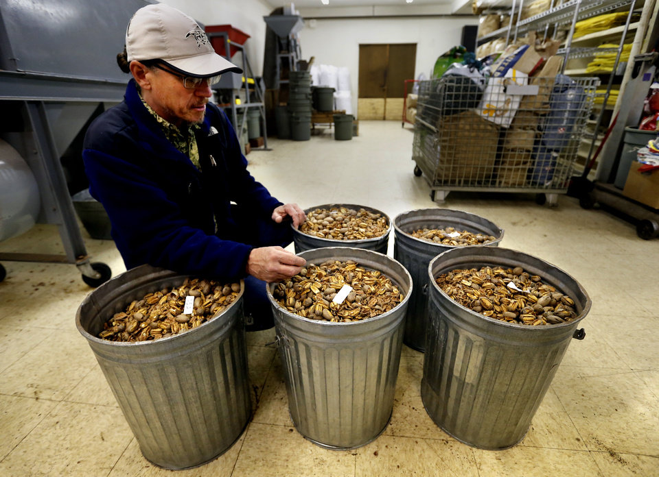 Brett Mason with Mason\'s Pecans & Peanuts shows buckets of freshly cracked pecans. PHOTO BY STEVE SISNEY, THE OKLAHOMAN STEVE SISNEY
