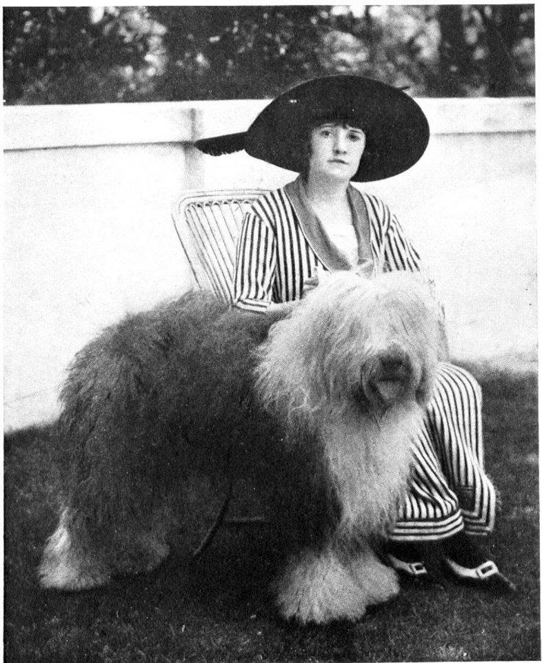 Photo - This 1914 publicity photo provided by the Westminster Kennel Club shows the 1914 Westminster Best In Show winner, Slumber. Sheepdogs have been recognized by the American Kennel Club since the late 1800's and won best in show at Westminster in 1914 and 1975. Breeders in the United States and England are concerned about the drop in the number of purebred sheepdog puppies registered in the two countries each year, as more owners choose smaller dogs like pocket pets and designer puppies. (AP Photo/Westminster Kennel Club)