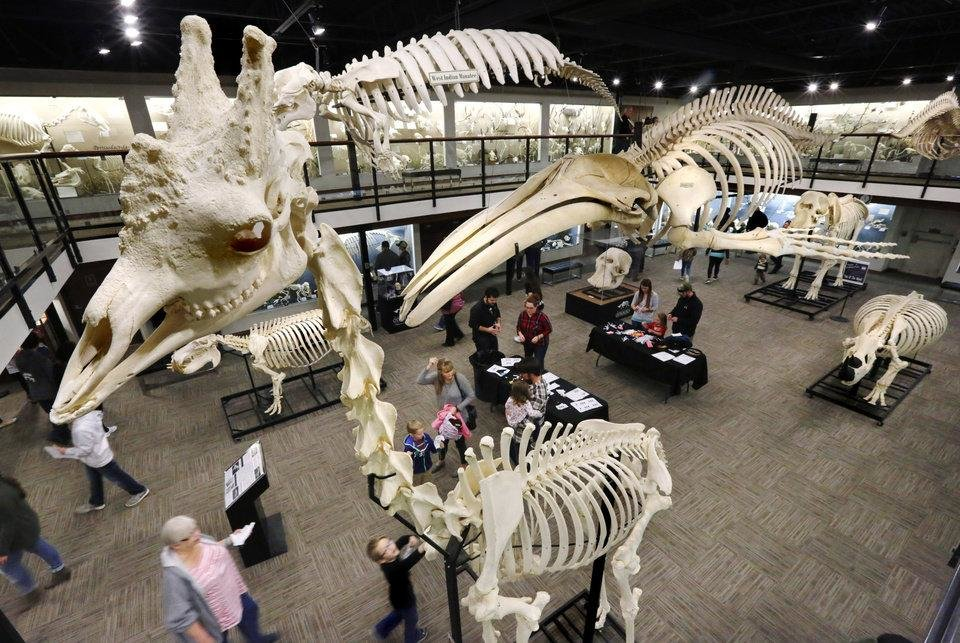 Photo - Visitors look at skeletons of all sizes and species inside the Museum of Osteology, 10301 S. Sunnylane, in southeast Oklahoma City, on Monday, March 13, 2017. In foreground is a giraffe skeleton. [The Oklahoman Archives]