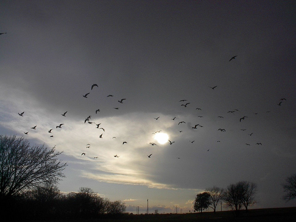 Bats in midwest city. birds or whatever cool though huh<br/><b>Community Photo By:</b> Tama<br/><b>Submitted By:</b> Tama, Midwest