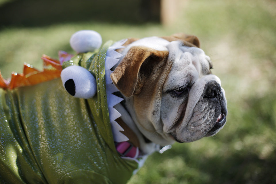 Avery is dressed as a dinosaur during a dog and child costume show at the Yukon Community Center in Yukon, Okla., Saturday, Oct. 27, 2012.  Photo by Garett Fisbeck, The Oklahoman