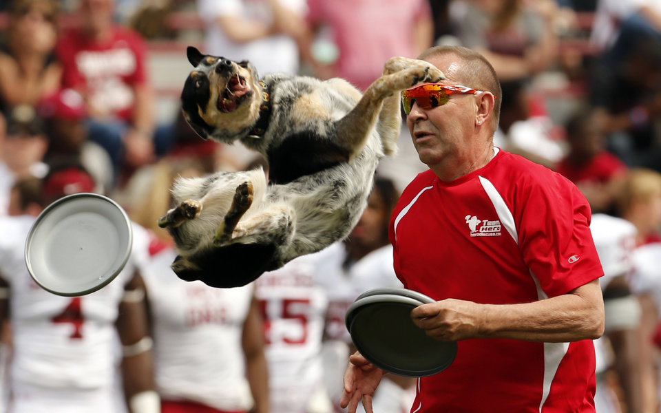 Photo - A dog act performs at halftime during the Spring College Football Game of the University of Oklahoma Sooners (OU) at Gaylord Family-Oklahoma Memorial Stadium in Norman, Okla., on Saturday, April 12, 2014.  Photo by Steve Sisney, The Oklahoman