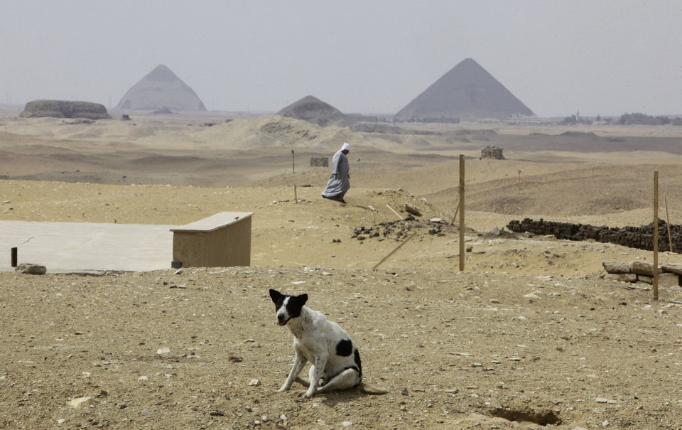 Photo - A stray dog scavenges for food at the historical site of the Giza great Pyramid, right, and the Bent Pyramid of Dahshur, left, at the Saqqara archaeological site, 30 kilometers (19 miles) south of Cairo, Egypt, Thursday, May 8, 2014. Egypt's vital tourism industry has suffered in the wake of the 2011 uprising that toppled autocratic leader Hosni Mubarak. (AP Photo/Amr Nabil)